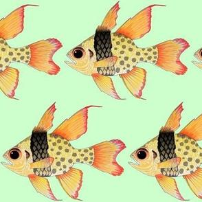Pajama Cardinalfish on light green
