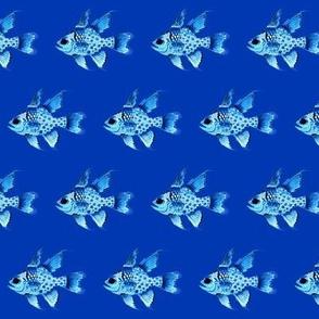 Pajama Cardinalfish in blues