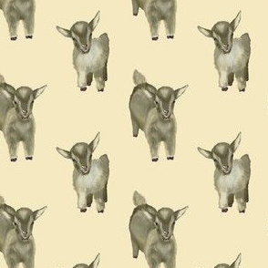 Little goats
