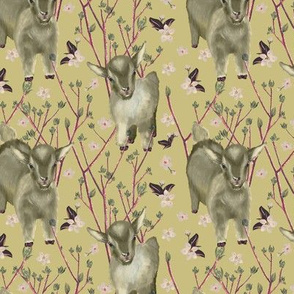 Little goats and springtime