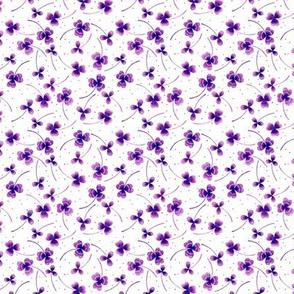 clover tiny white purple