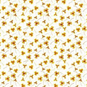 clover tiny white yellow