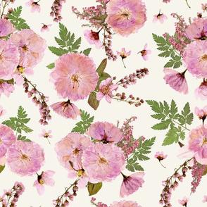 "10""  Dried Cherry Blossoms, pressed cherryblossom, cream"