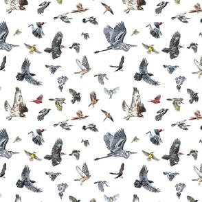 Rokeby Birds