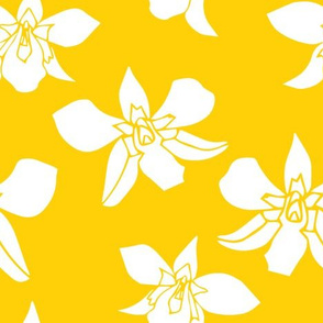 orchids on yellow