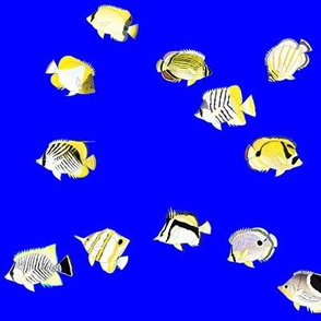 Twelve Butterflyfish Scatter on deep blue