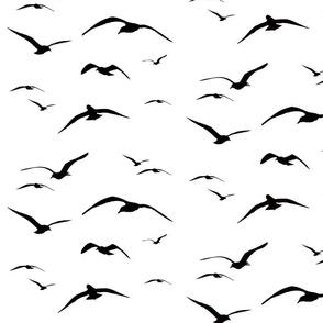 Glimpse of Gulls