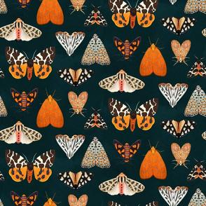 Tiger Moths 9 across