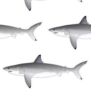 Great White Shark v2020