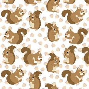 Squirrels and acorns