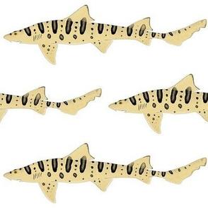 Leopard Shark 2020