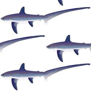 Common Thresher Shark