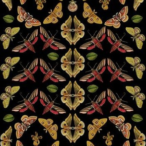 Moths & Orchids in Black, medium scale