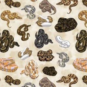 Ball Python Morph Snake Pattern Small Size