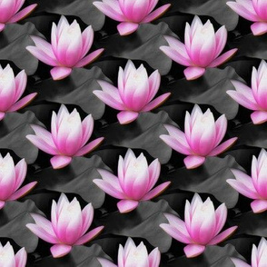 pink water lily - painting effect - small