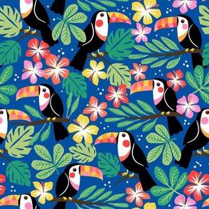 summer toucan 2