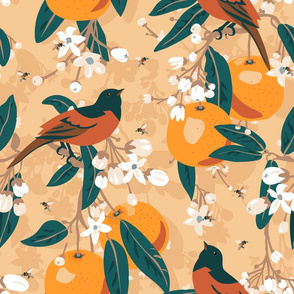 Orchard orioles in the orange grove.