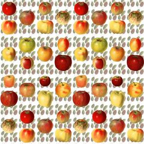 18 Heirloom apples on leaves.
