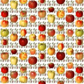18 Pretty Heirloom  Apples on Leaves