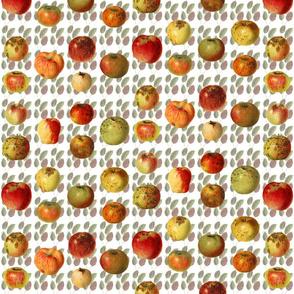 18 Ugly Heirloom Apples on Leaves