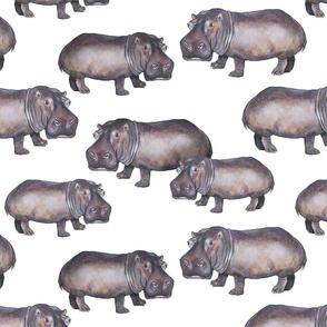 Hippos on White