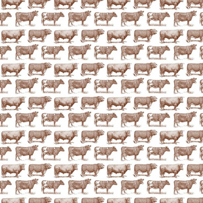 Classic Cow Illustrations in Walnut Brown with White Background (Small Scale)