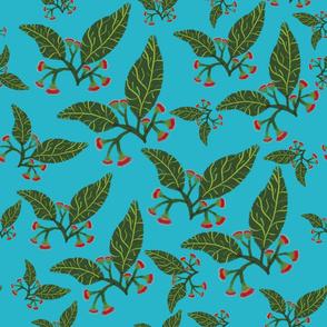 Red flowering gum eucalyptus