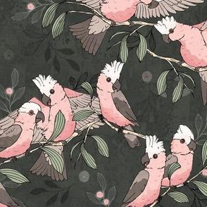 Flock of Galahs_pinkandgrey