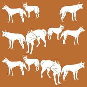 Dingoes in Burnt Orange (Solid)