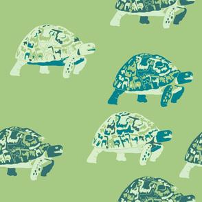 green leopard tortoise