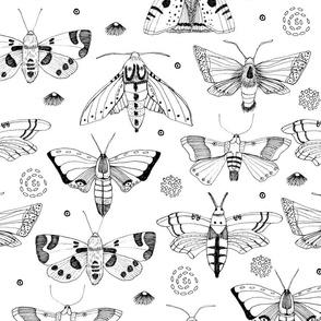 Moths B&W