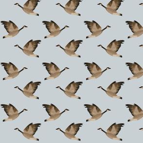Goose single light blue