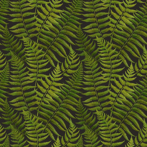 thickets of fern leaves on black background