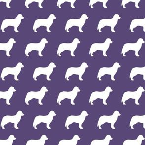 Bernese Dog Silhouette Purple Bkgd