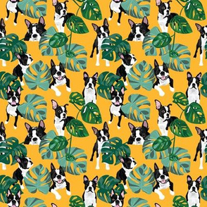 Boston Terrier Tropical