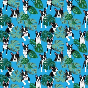 Boston Terriers Tropical