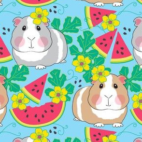 large guinea pigs in a watermelon patch on blue