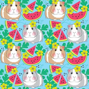 medium guinea pigs in a watermelon patch on blue