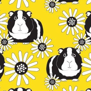 black and white guinea pigs and daisies on yellow