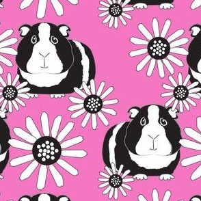 black and white guinea pigs and daisies on bright pink