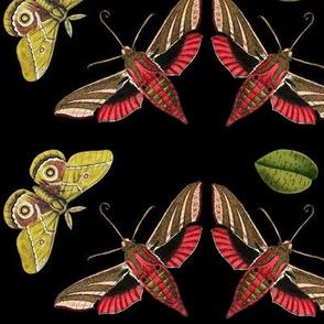 Art Deco Moths in Black, JUMBO