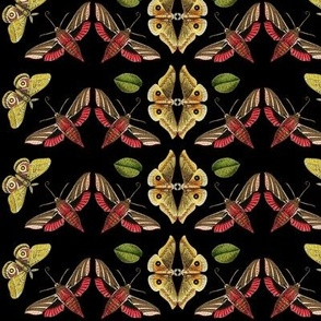 Art Deco Moths in Black
