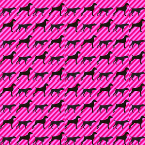 alt weim sillouettes candy stripes diAgonol