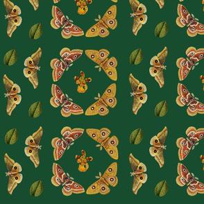 moths-SIMPLER