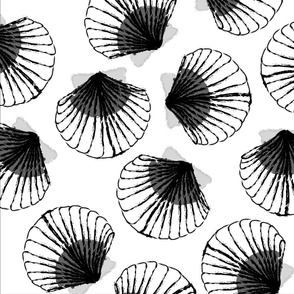 LARGE Shells - white and black