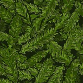 Redwood Leaves Summer Green