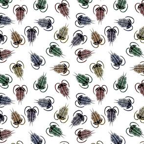 Trilobite scatter (rainbow)