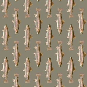 small rainbow trout (vertical) on pewter grey