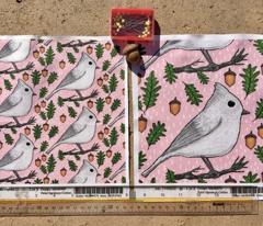 backyard winter birds: Oak Titmouse, large scale, gray grey white pink green brown