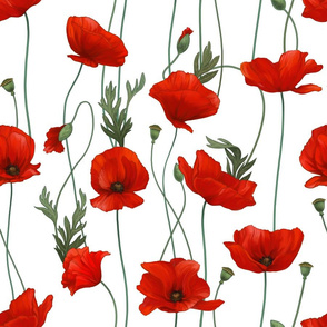 Red poppies with intertwined stems